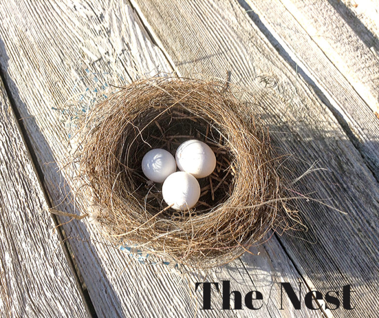 What I Learned from a Little Bird Nest in My Little Fern on My Little Porch